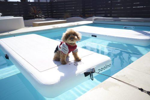 犬が泳ぐことができるプール