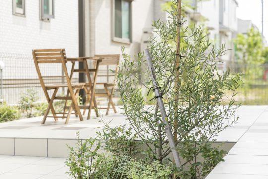 シンボルツリーのオリーブ